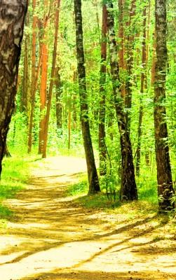Park summer landscape